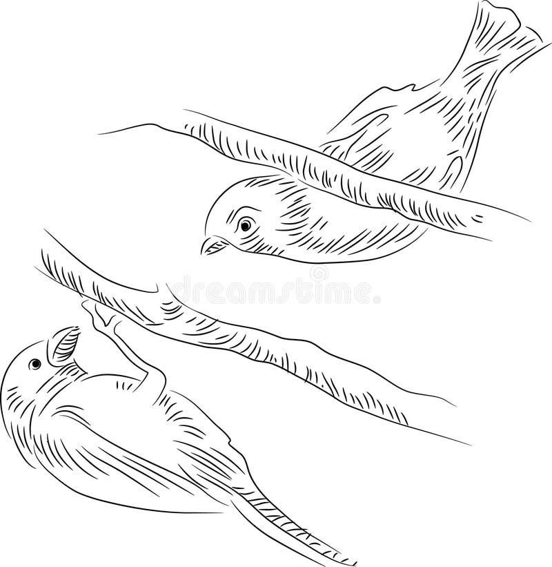 Птицы на дереве иллюстрация вектора