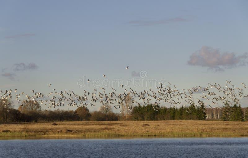 Птицы над озером стоковое изображение