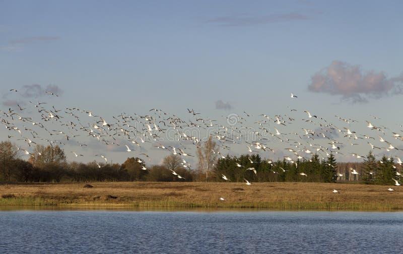 Птицы над озером стоковые фото