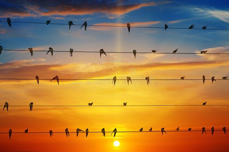 Птицы на предпосылке восхода солнца стоковые фотографии rf
