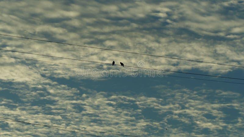 2 птицы на проводе стоковое фото rf