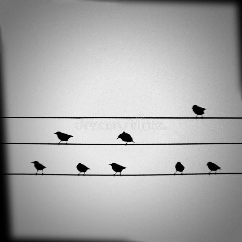 Птицы на проводах иллюстрация вектора