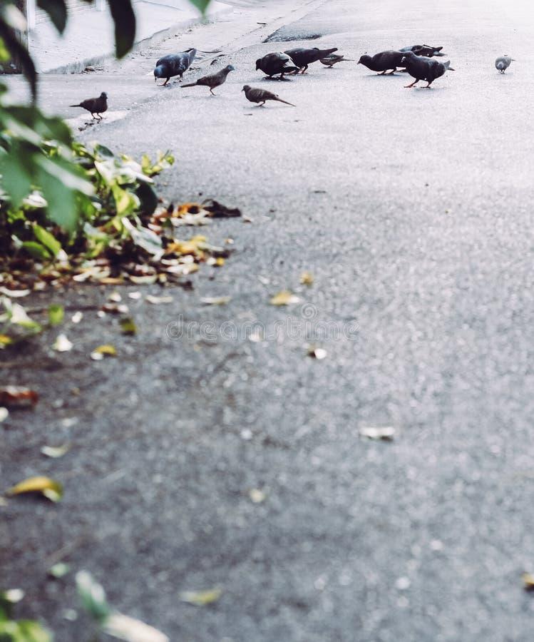 птицы немногая стоковое фото rf