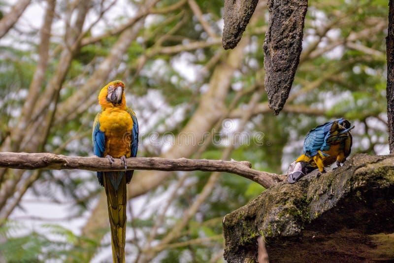 Птицы охлаждая в гнезде стоковые фотографии rf