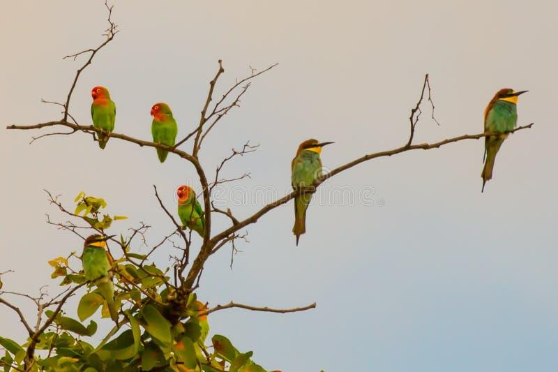 Птицы пера стоковое изображение rf