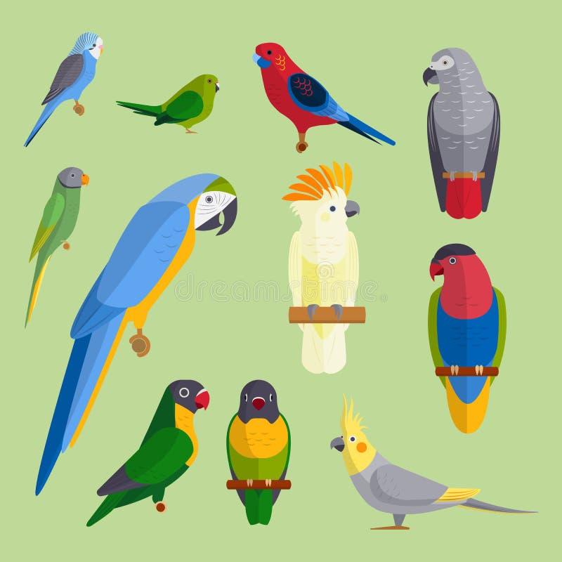 Птицы попугаев разводят образования длиннохвостых попугаев животной природы вида иллюстрацию вектора любимчика тропического красо бесплатная иллюстрация