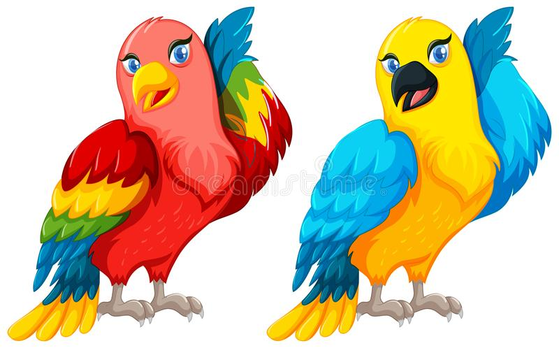 2 птицы попугая с красочным пером бесплатная иллюстрация