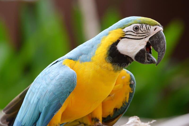 Птицы попугая стоковые фотографии rf