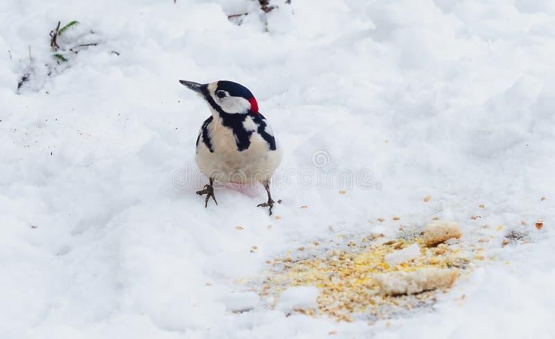 птицы подавая зима стоковое изображение rf