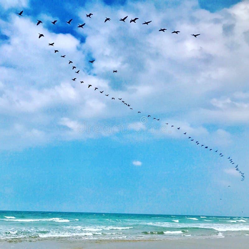 Птицы проникая на юг стоковое фото rf