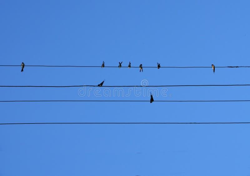 Птицы сидят на проводах стоковые изображения rf