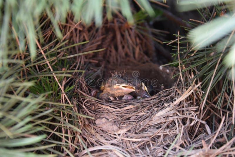 Птицы спать стоковые фото