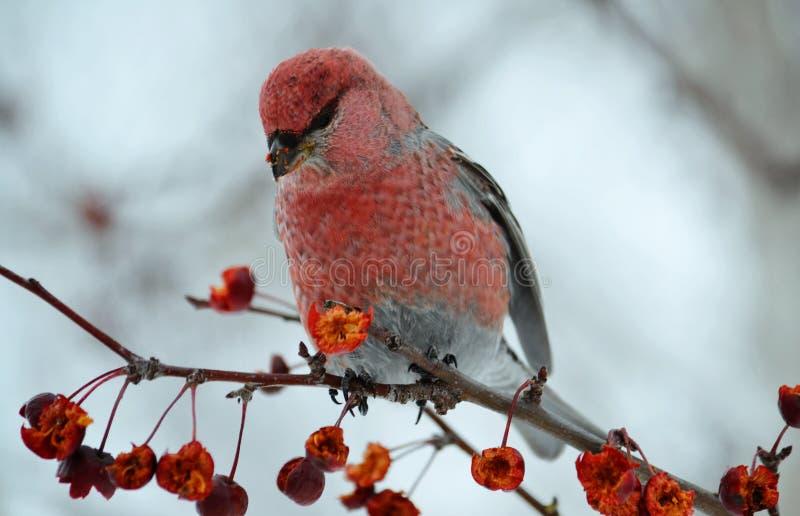 Птицы степей стоковые фотографии rf