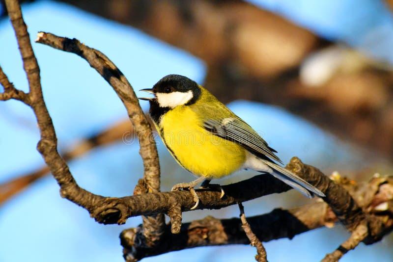 Download Птицы степей стоковое изображение. изображение насчитывающей полет - 81814055