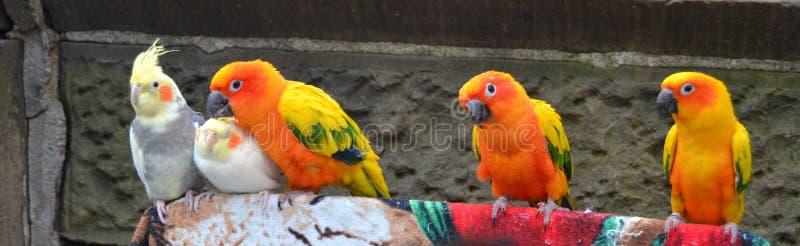 птицы цветастые стоковая фотография