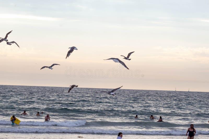 Птицы чайки летая над океаном стоковые фотографии rf