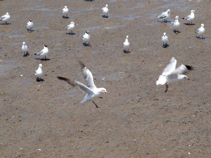 Птицы чайки на море стоковое изображение