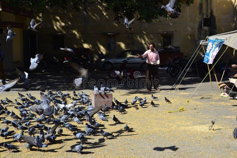 Птицы человека подавая на квадрате стоковые фото