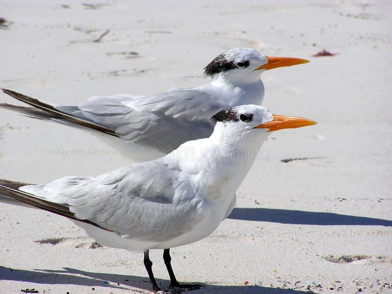 птицы 2 стоковое фото rf