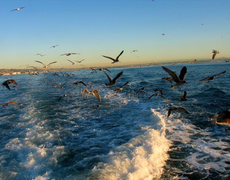 Download птицы стоковое изображение. изображение насчитывающей небо - 492547