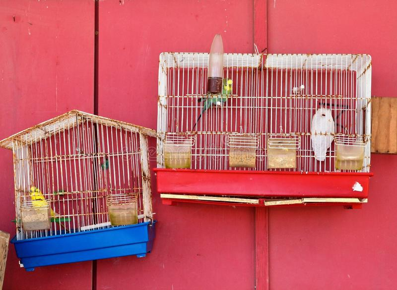 Птицы Budgie в клетках с красной предпосылкой стоковая фотография rf