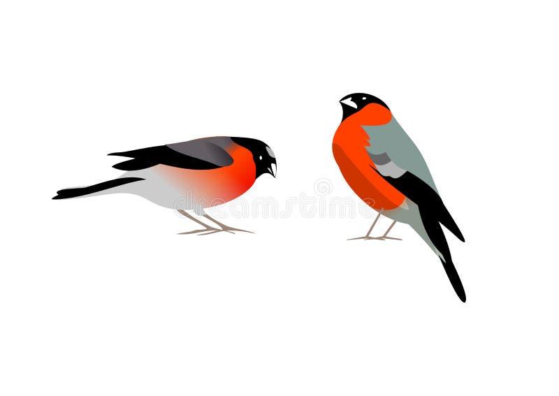 2 птицы bullfinch бесплатная иллюстрация