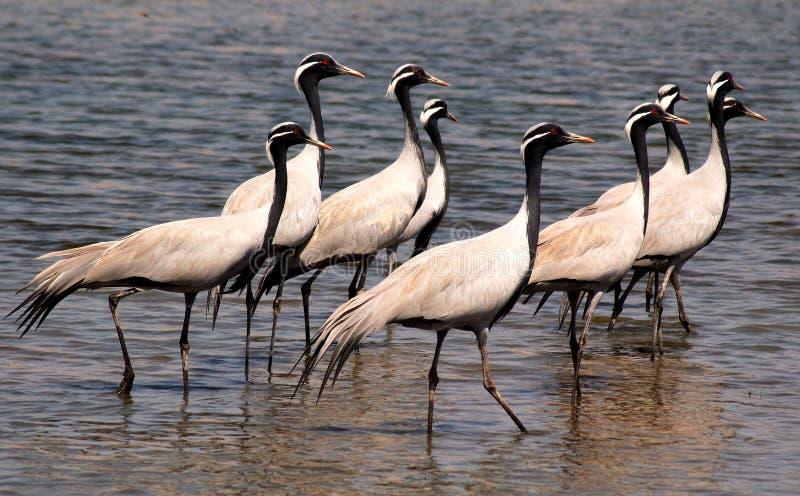 птицы flock прилетное стоковые фото
