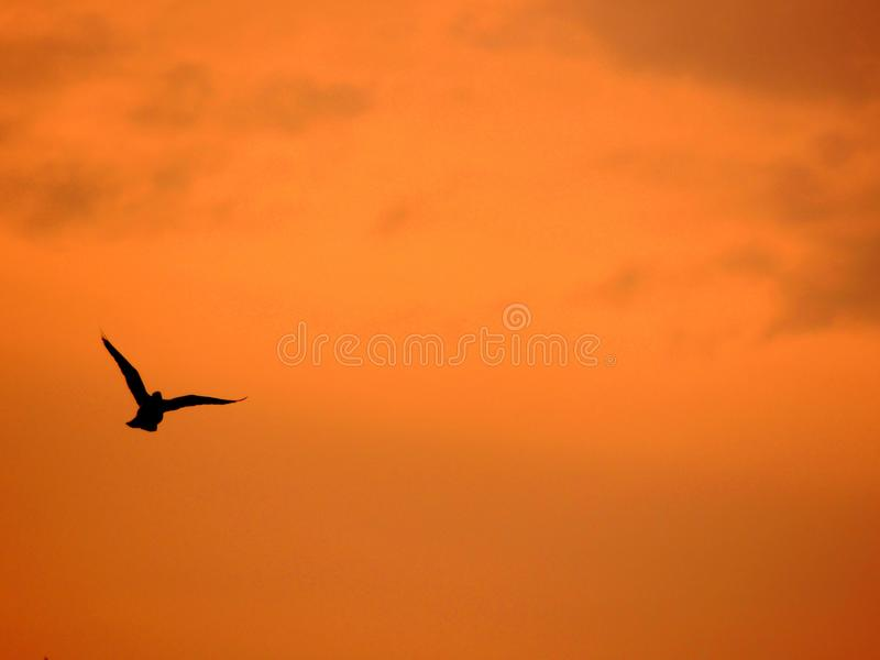 Птицы Homs Сирии стоковое фото
