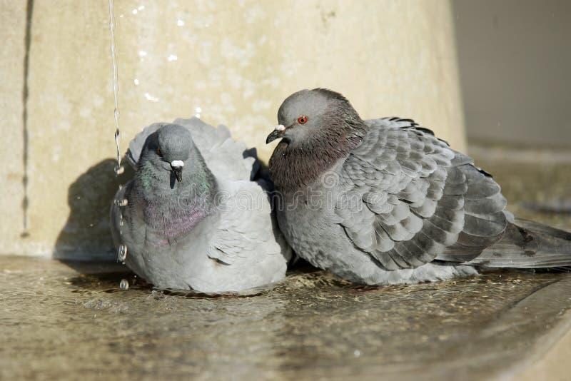 птицы sunbathing стоковое изображение rf