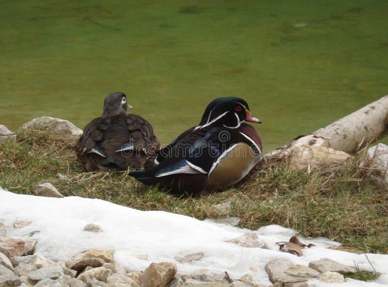 птиц стоковое фото