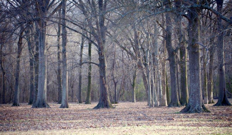Пугающая сцена древесин стоковое фото rf