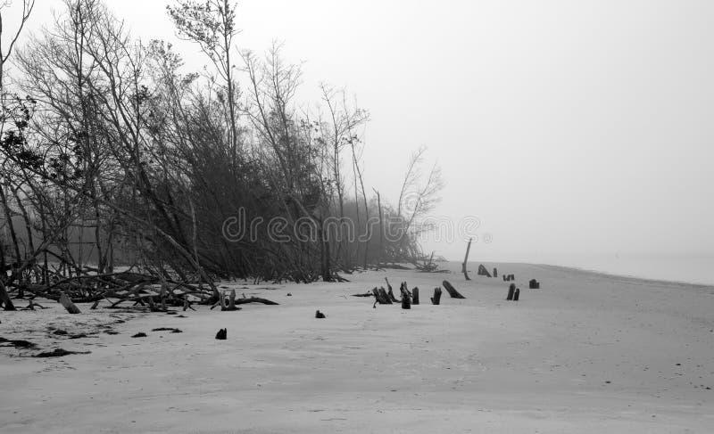 Пугающие деревья на туманном пляже стоковая фотография rf