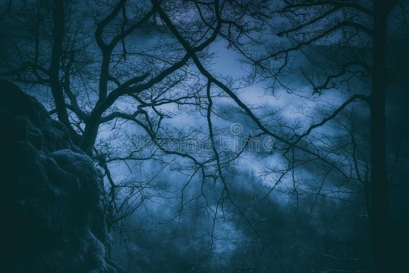 Пугающие деревья с страшными ветвями на ноче стоковая фотография