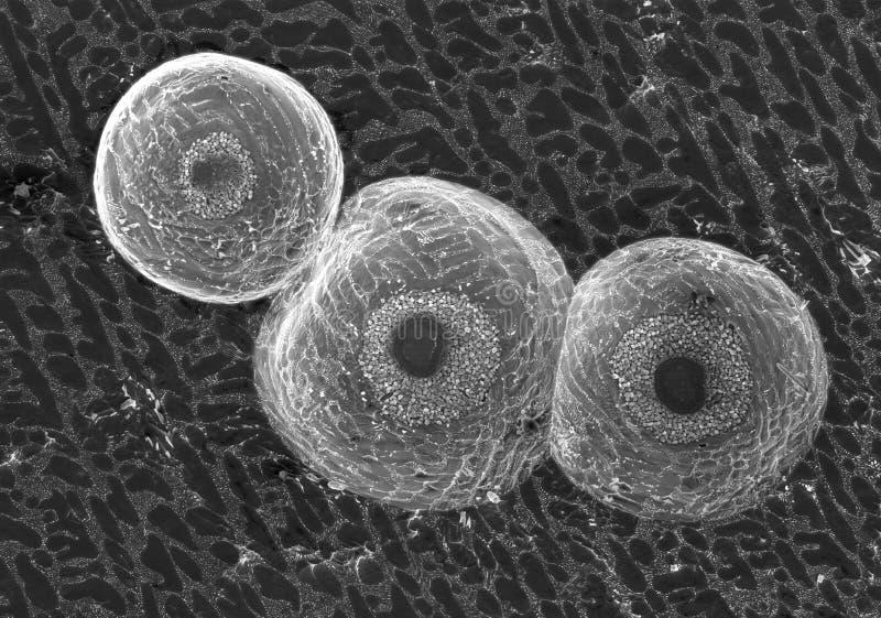 Пузыри в электронном припои стоковая фотография