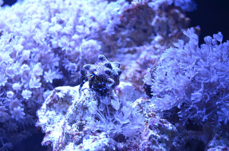 пузыри копируют вектор текста космоса seaweeds моря жизни иллюстрации рыб стоковые изображения rf