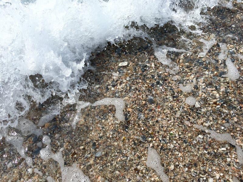 Пузырь моря стоковое фото rf