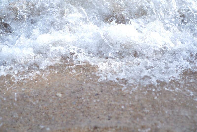 Пузырь моря стоковые фото