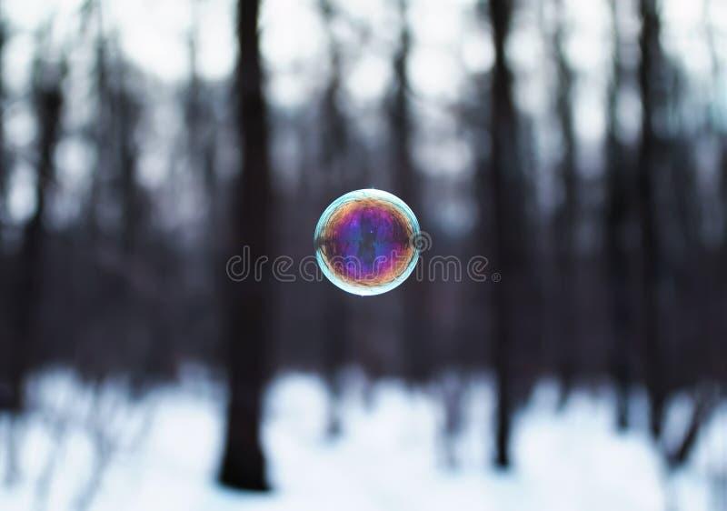 пузырь мыла shimmers и летает весной парк стоковые изображения