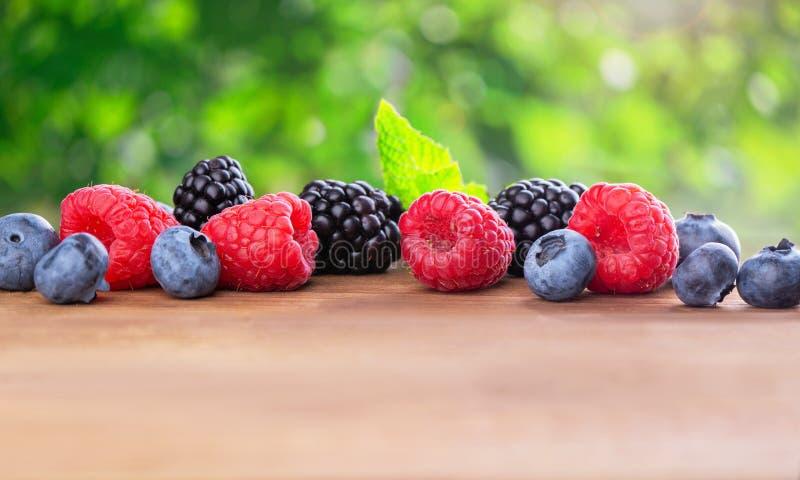 Пук диких ягод стоковое изображение
