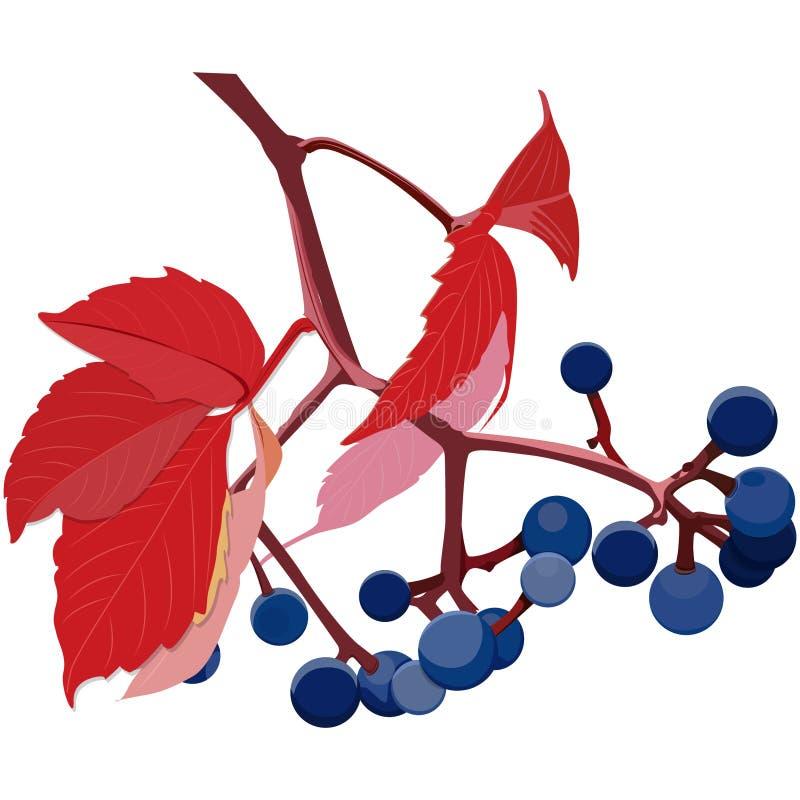пук дикого крана виноградин выходит теплое искусство вектора временного увольнения осени иллюстрация штока