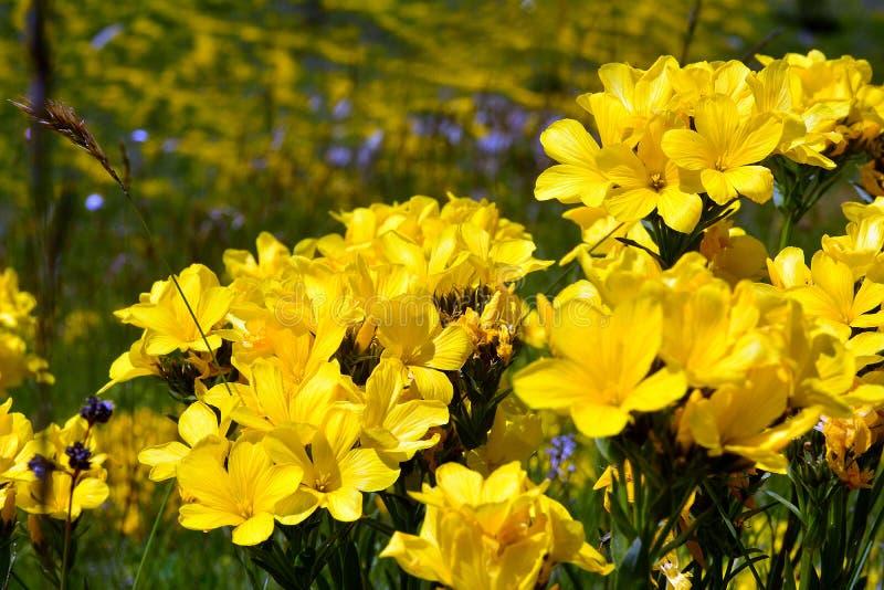 Пук желтых цветков связал в больших номерах стоковые изображения rf