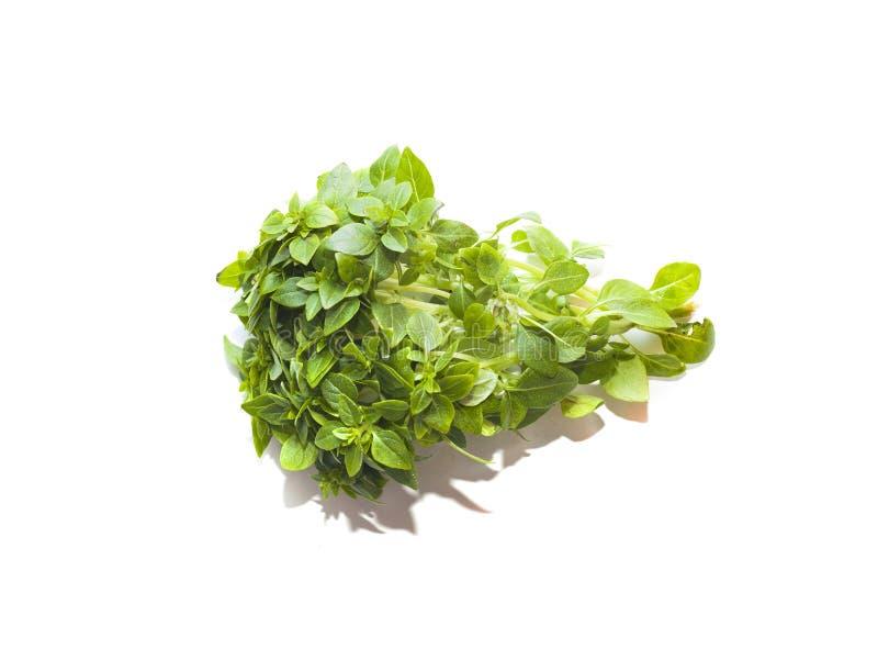 Пук зеленого базилика на белой предпосылке стоковое фото