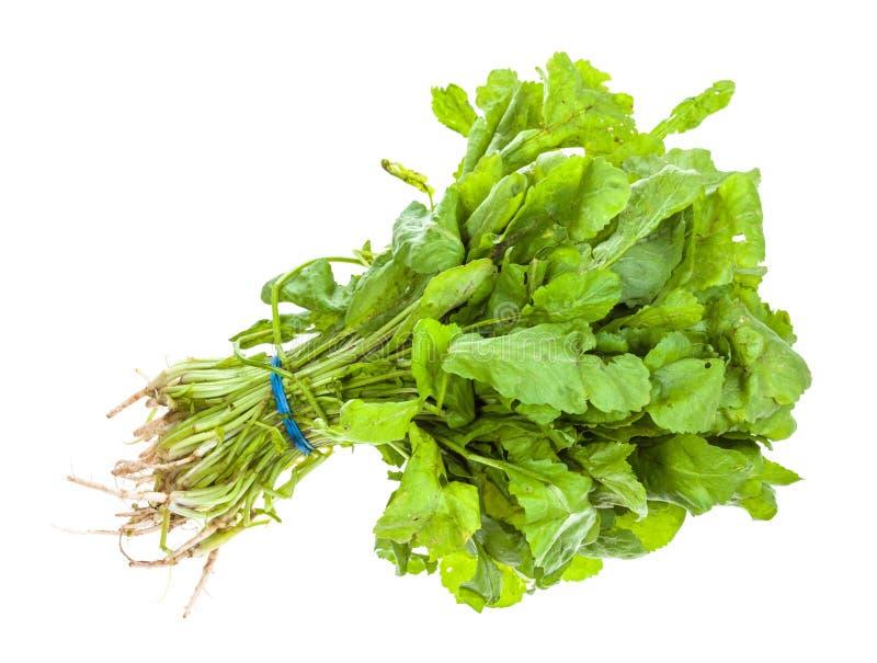 Пук зеленой кавказской травы tsitsmati кресса стоковое изображение