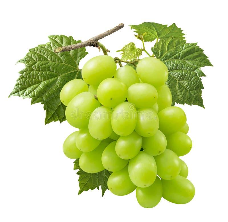 Пук зеленых виноградин на ветви изолированной на белой предпосылке стоковые изображения