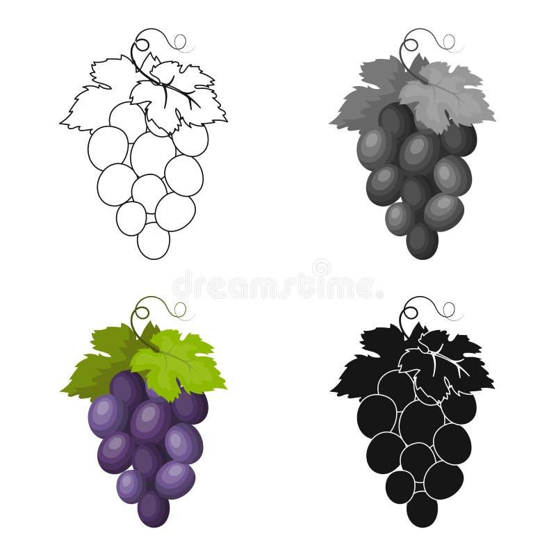 Пук значка виноградин вина в стиле шаржа изолированного на белой предпосылке Иллюстрация вектора запаса символа страны Испании иллюстрация штока