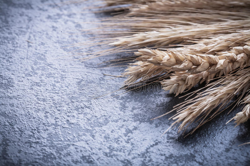 Пук золотых ушей пшеницы и рож закрывает вверх по взгляду стоковая фотография
