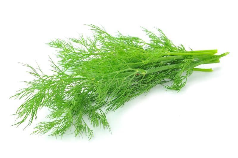 Пук зрелого зеленого укропа стоковое изображение rf