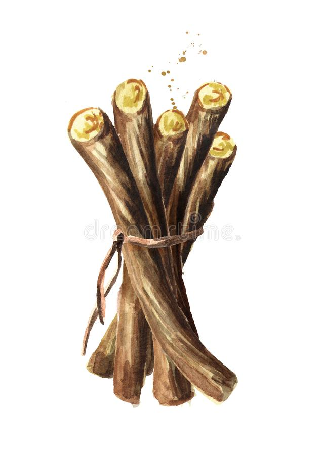 Пук корней солодки Иллюстрация акварели нарисованная рукой, изолированная на белой предпосылке бесплатная иллюстрация