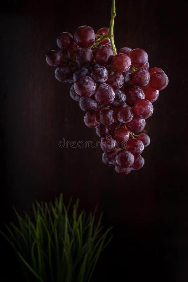 Пук красной виноградины стоковое изображение