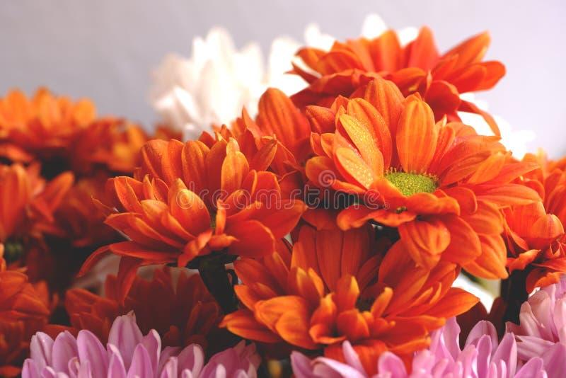 Пук красочных цветков, chrysanthemium стоковая фотография